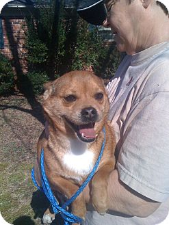 Chihuahua/Terrier (Unknown Type, Small) Mix Dog for adoption in Baltimore, Maryland - Earl--URGENT