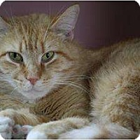 Adopt A Pet :: Carmel - Anderson, IN