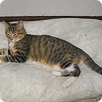 Adopt A Pet :: Jo - Grand Rapids, MI