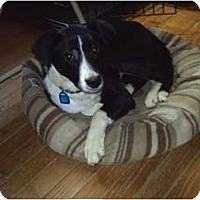 Adopt A Pet :: Molly - cedar grove, IN