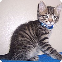 Adopt A Pet :: Logan - Gray, TN