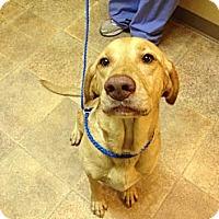 Adopt A Pet :: Millie - Cumming, GA