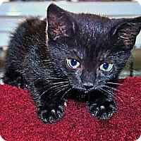 Adopt A Pet :: Nancy - Victor, NY