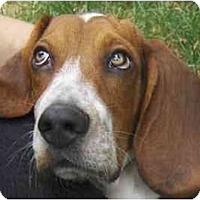 Adopt A Pet :: PENDING - Toronto/Etobicoke/GTA, ON