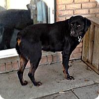 Adopt A Pet :: Hope - Silsbee, TX