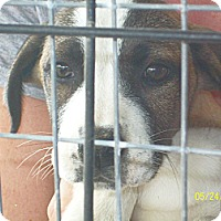 Adopt A Pet :: Whitney - Mexia, TX