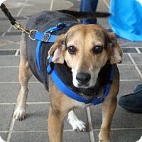 Adopt A Pet :: Jackie - Richmond, VA