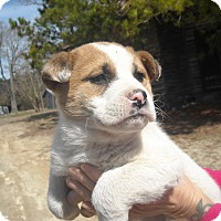 Adopt A Pet :: Jane ADOPTION PENDING - Edgewater, NJ