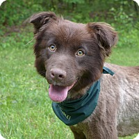 Adopt A Pet :: Maurice - Mocksville, NC