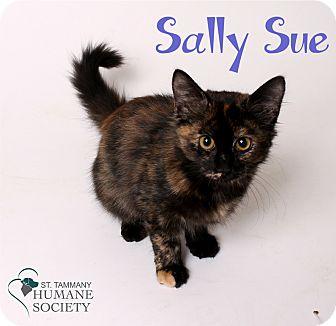 Domestic Shorthair Kitten for adoption in Covington, Louisiana - Sally Sue