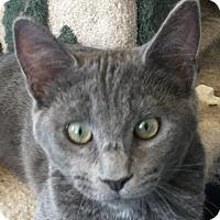 Adopt A Pet :: David - Winchester, CA
