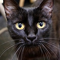 Adopt A Pet :: Lil Kim - Roseville, CA