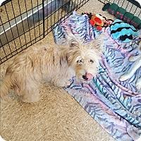 Adopt A Pet :: Finn - Brownsville, TX