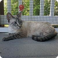 Adopt A Pet :: Lilith - Arlington, VA
