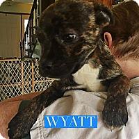 Adopt A Pet :: Wyatt - Winchester, VA