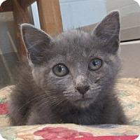 Adopt A Pet :: Paula - North Richland Hills, TX