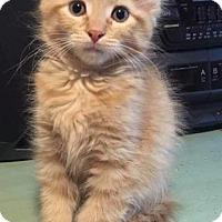 Adopt A Pet :: Eleven - Valley Park, MO