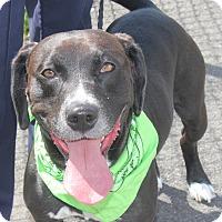 Adopt A Pet :: NUCKY - Clayton, NJ
