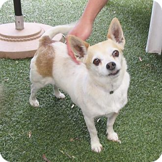Terrier (Unknown Type, Medium) Dog for adoption in Oakland, California - Matcha
