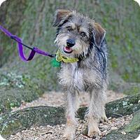 Adopt A Pet :: Oscar - Kingwood, TX