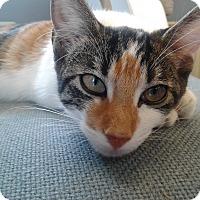 Adopt A Pet :: Dorothy Sue - Lake Charles, LA