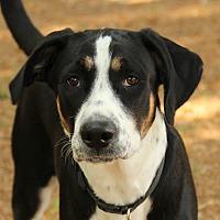 Adopt A Pet :: Cody - O Fallon, IL