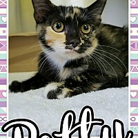 Adopt A Pet :: Patty - Edwards AFB, CA