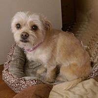 Adopt A Pet :: Peaches - Greeley, CO