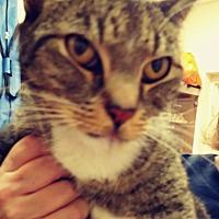 Adopt A Pet :: Lita - Trevose, PA