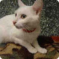 Adopt A Pet :: Cloud - Arlington, VA