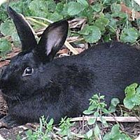 Adopt A Pet :: Midnite - St Johns, FL