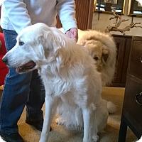 Adopt A Pet :: Renee - Minneapolis, MN