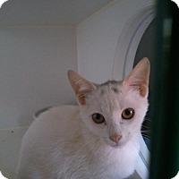 Adopt A Pet :: Powder - Hamilton, ON