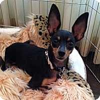 Adopt A Pet :: Beauregard - Sacramento, CA