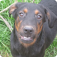 Adopt A Pet :: Jacques - Derry, NH