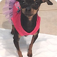 Adopt A Pet :: Diamond - Orlando, FL