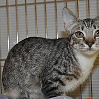 Adopt A Pet :: Dixie - Pompano Beach, FL