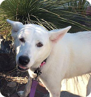 Shepherd (Unknown Type) Mix Dog for adoption in Irvine, California - NADIA