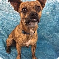Adopt A Pet :: Barkley - Lake Elsinore, CA