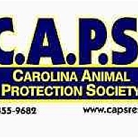 Chihuahua/German Shepherd Dog Mix Dog for adoption in Jacksonville, North Carolina - Petsmart Saturdays!