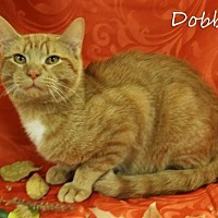 Adopt A Pet :: Dobbs Male - Knoxville, TN