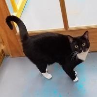 Adopt A Pet :: Sky - Nogales, AZ