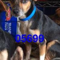 Dachshund Mix Dog for adoption in Kiln, Mississippi - PLUTO