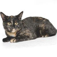 Adopt A Pet :: LOTUS - Gloucester, VA