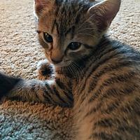 Adopt A Pet :: Neville - Turnersville, NJ