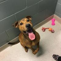 Adopt A Pet :: BB 5389 - Columbus, GA