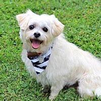 Adopt A Pet :: MOCHA - Portland, ME