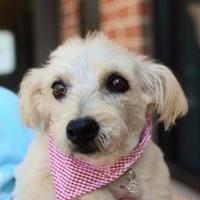 Adopt A Pet :: Sheila - Greenwood, SC