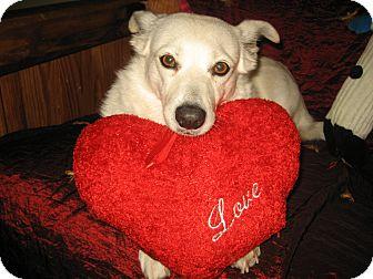 Corgi/Cocker Spaniel Mix Dog for adoption in Huntington Beach, California - Linda