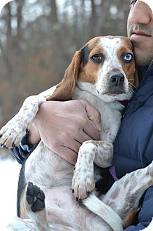 Beagle Mix Dog for adoption in Waldorf, Maryland - Emilou